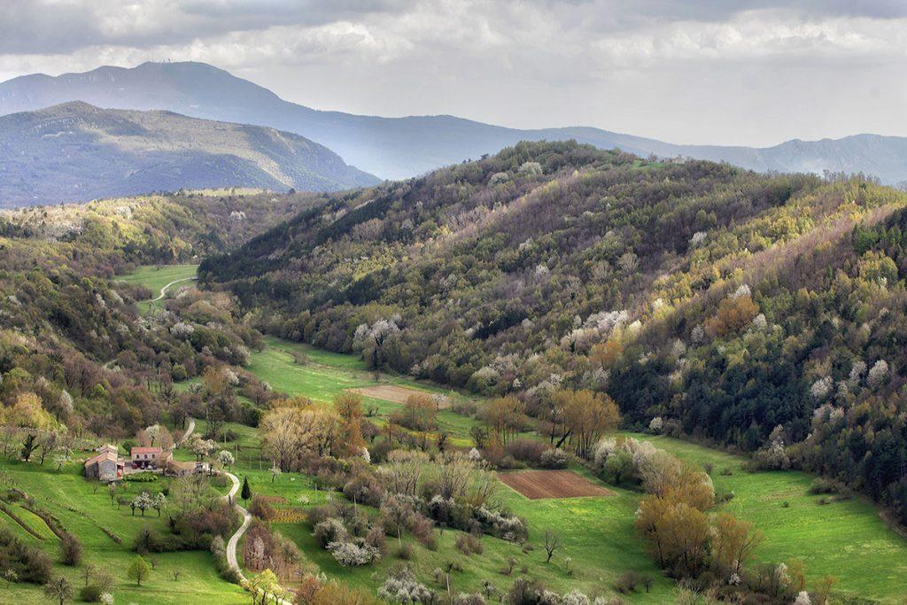 Malownicze okolice Buzetu (fot. Piotr Deska)