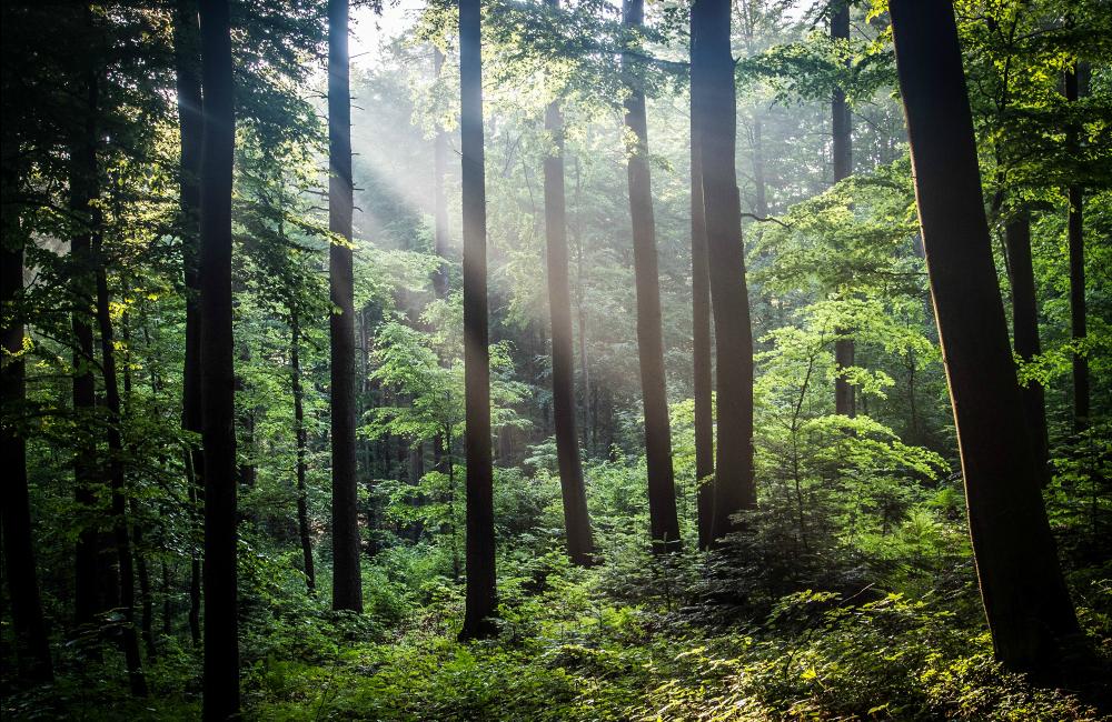 Główny Szlak Świętokrzyski las