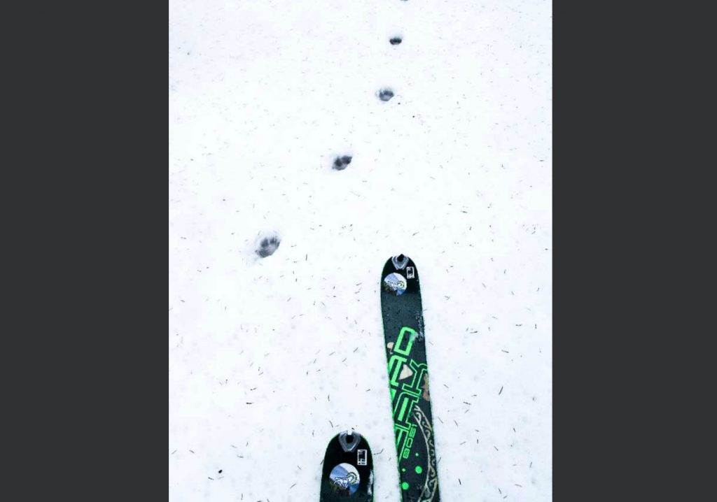 Bieszczady na skiturach