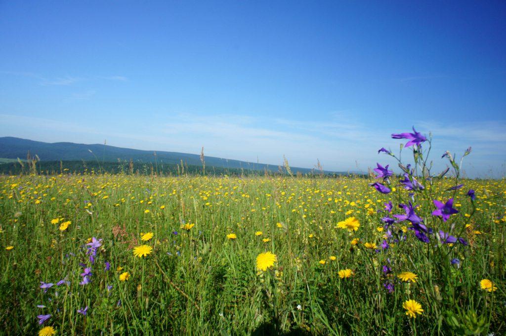 wiosną w górach - Beskid Niski