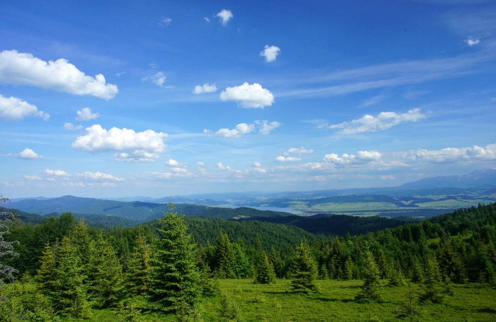 Panorama z Gorców