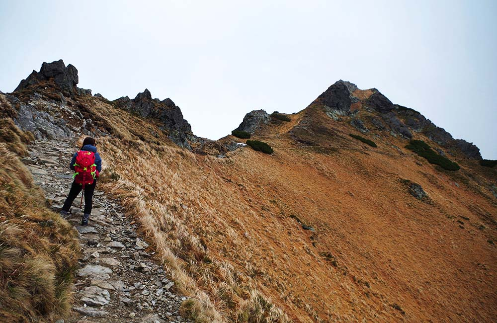 Goryczkowa Czuba w Tatrach