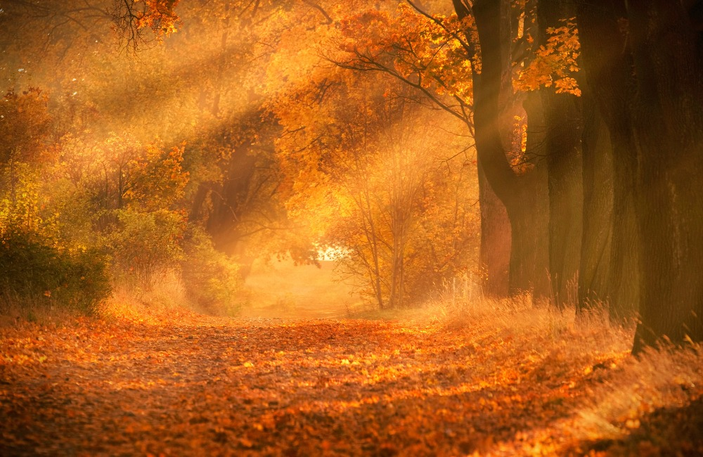 leśna ścieżka w kolorach jesieni