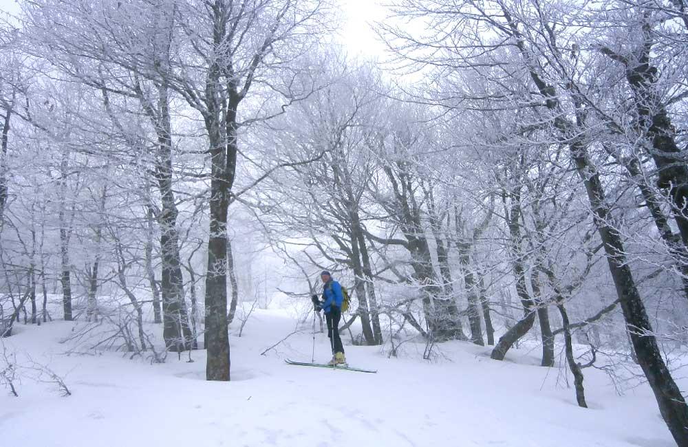 Po śniegach Paportnej w Bieszczadach Wysokich