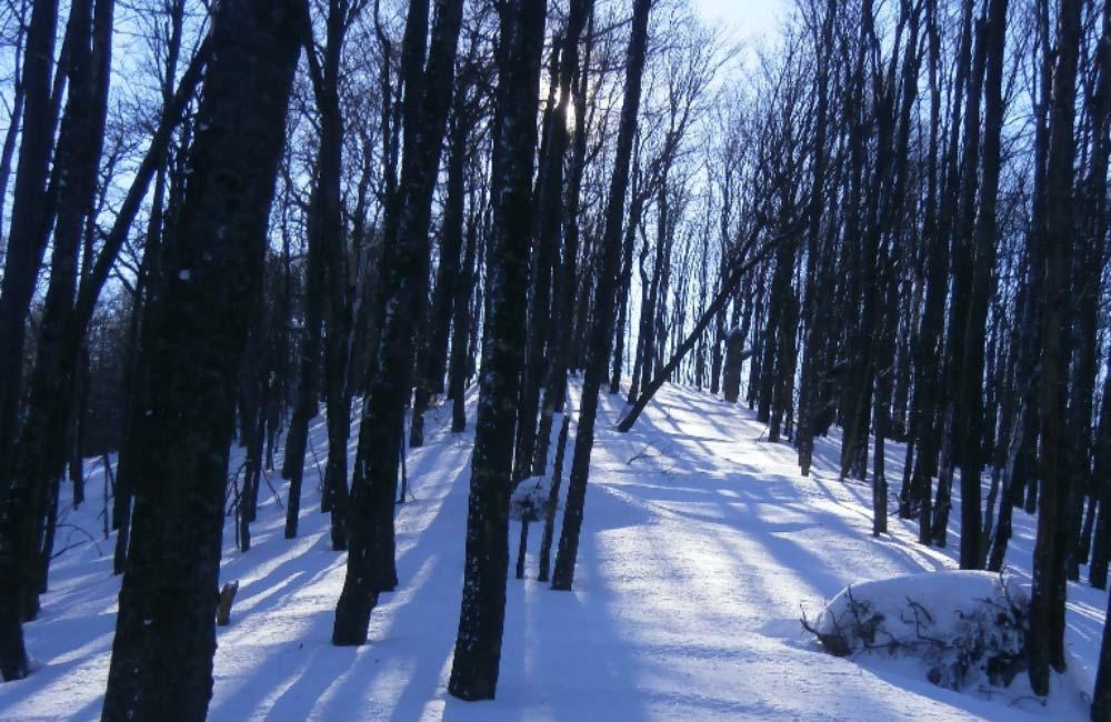 Czy w Bieszczadach można jeździć na skiturach?