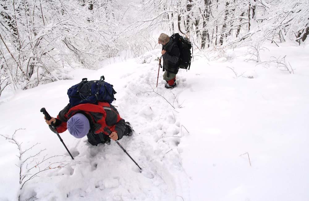 Do czego służą kijki trekkingowe