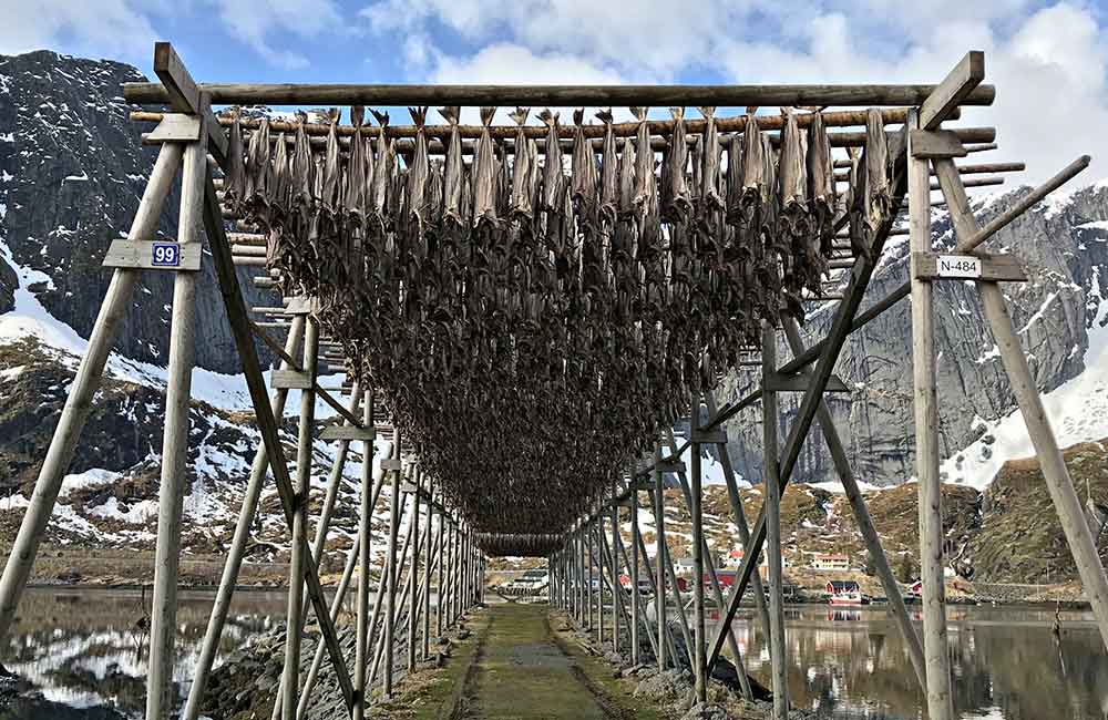 Atrakcje północnej Norwegii - Drewniany stelaż z suszonymi dorszami