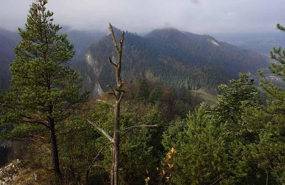 Trasy biegowe w Gorcach i Pieninach