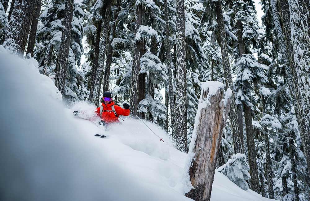Skitouring w lesie